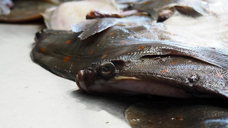Deutschland geht der Fisch aus