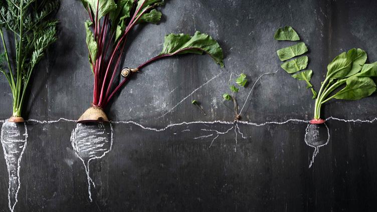 Buchtipp: Leaf To Root – Alles vom Gemüse essen