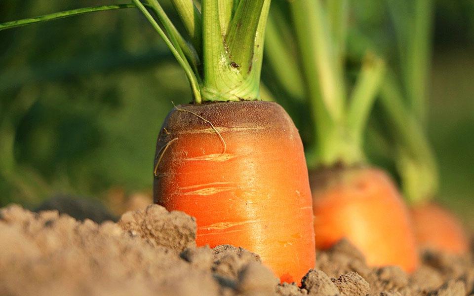 5 Vorteile, die eine saisonale Ausrichtung des Speisenangebots mit sich bringt