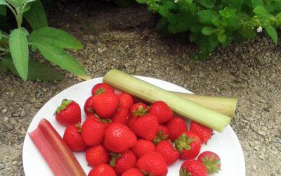 Nachhaltigkeit in der Gastronomie: Das Umwelt-Bildungszentrum Berlin lehrt, wie es geht