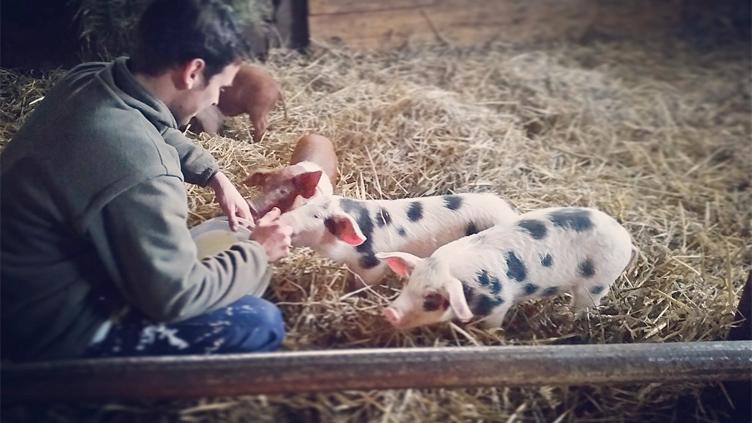 Eine Heimat für bedrohte Schweinerassen